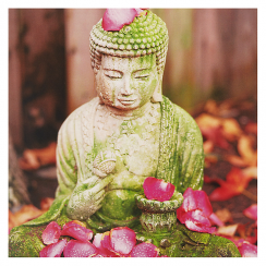 Buddha & Petals Photographic Card